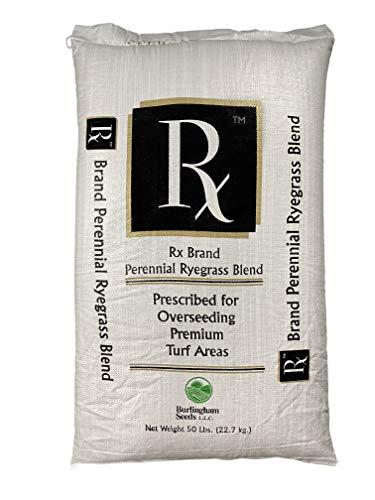 Burlingham Seeds Rx Perennial Ryegrass Blend   100% Perennial Ryegrass   Blue TAG Certified Grass Seed (50 lbs (10,000 sq ft))
