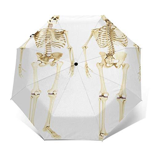 Paraguas Plegable Automático Impermeable Esqueleto anatomía médicamente, Paraguas De Viaje Compacto a Prueba De Viento, Folding Umbrella, Dosel Reforzado, Mango Ergonómico