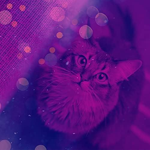 猫の音楽 BGM