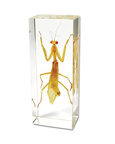 Praying Mantis Paperweight (4.25' x 1.75' x 1')