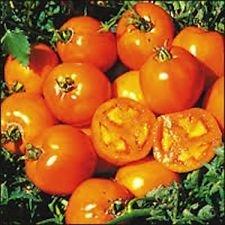 200 graines biologiques, Heirloom Seeds Sunray tomates nouvelles graines pour 2017