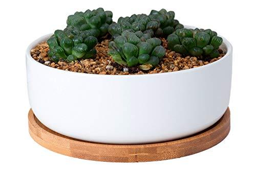 VanEnjoy Blumentopf für Sukkulenten, Kakteen, 16 cm, flach, rund, weiß, Keramik, mit Ablaufschale aus Bambus