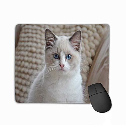 Rechteck rutschfeste Gummi Mousepad weiß Ragdoll Kätzchen weiß Ragdoll Kätzchen hellblaue Augen suchen Kamera vor Hintergrund weiße Kissen