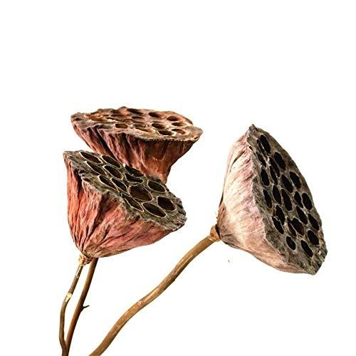 KDHJY Hohe Qualität Natürliche Getrocknete Bonsai-Dekor Seedpod von Lotus 3pcs Echt Pflanzen Blumen Getrocknete Brwon Lotus Pods mit Stielen deko Blumen (Color : 3pcs Brown no Seed, Size : L)