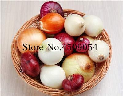 Shopvise 50pcs / Sac géant oignon vert doux espagnol Graines Légumes Germination 95% onion Semences pour Garden Seeds: 18