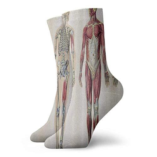 Medias de ocio de algodón atlético de 30 cm de anatomía humana