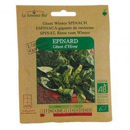 Graines bio Epinard Géant d'hiver - La Semence Bio