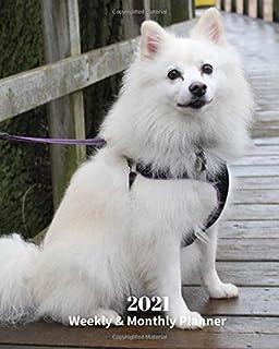 Dog Breeds In Uk