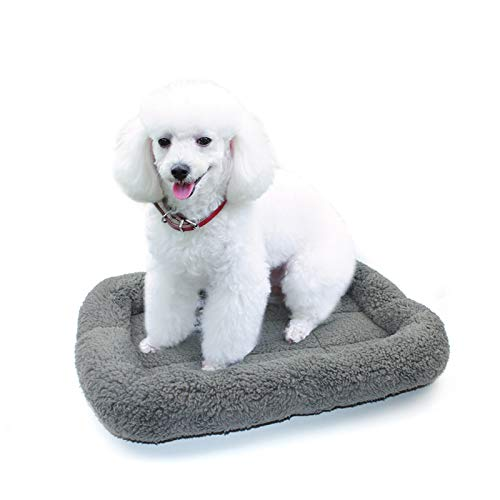 Can You Use Dog Pad for Cats?