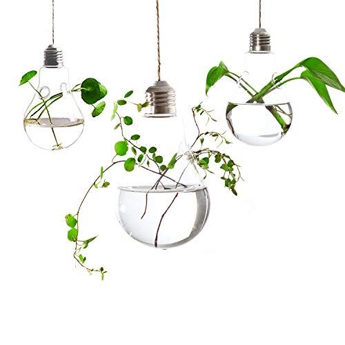 Lightbulb terrarium for water plants