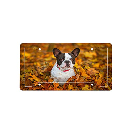 XfaithX Funny French Bulldog Dog in Fall Natural Scenery License Plate Frame Vehicle Auto Front Rear Cover Holder Metal Decorative Car Tags Frame for Women Girls Men Kids with Anti Theft Screws,Caps