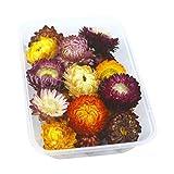 Flor Artificial, Cabezas de flores pegatinas de uñas mixtas Decoraciones de llenado 1 caja Aromaterapia Flores flotantes Crystal Epoxi Filler Secado Planta Artificial