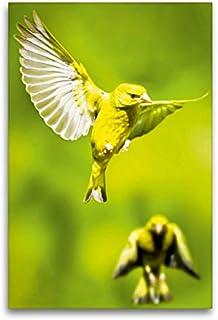 CALVENDO Lienzo Premium de 60 cm x 90 cm de Alto, Dos fincos Verdes en el Vuelo con alas de Gran Precio, Imagen sobre Bastidor, Imagen prevista en Verde (Cloro carduelis) Animales, Animales