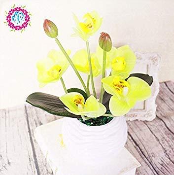 50 pcs Iris graines, graines de bonsaï fleurs vivaces de jardin, magnifiques fleurs coupées graines rares de fleurs pour la plantation jardin maison orchidée 4