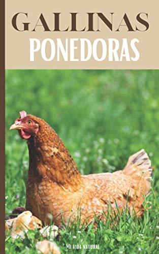 Gallinas Ponedoras: Todo lo que se necesita para criar una g