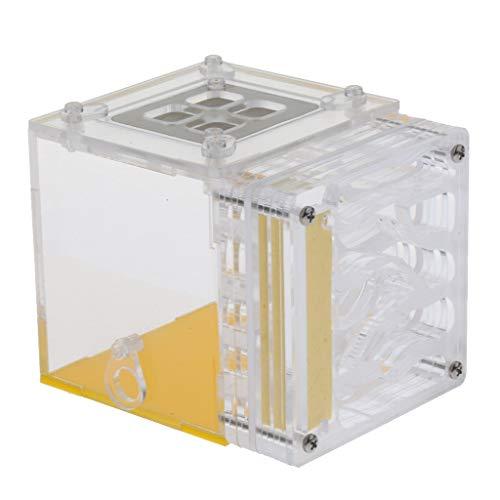 HomeDecTime Ameisenfarm Ameisen Nest Acryl Fütterung Box - Typ 1
