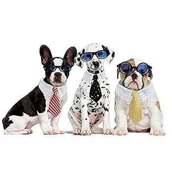 Dadabig 4 PCS Cravate pour Animaux de Compagnie, Noeud Papillon Chien Réglable Cravate pour Petits Chiens Cravate de Chat Accessoires de Toilettage de Cravates de Chiot Chaton