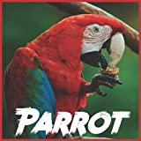 Parrot Calendar 2022: 2021-2022 Parrot Weekly & Monthly Planner   2-Year Pocket Calendar   19 Months   Organizer   Agenda   Appointment   For Parrot Lovers