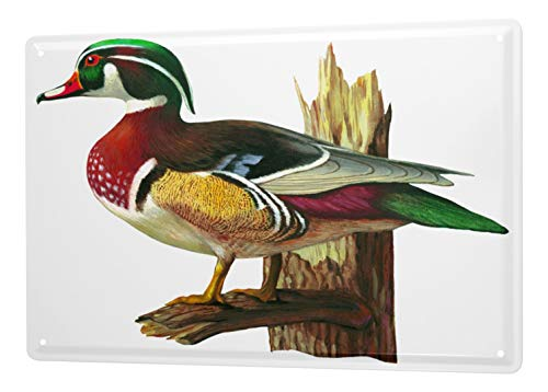 LEotiE SINCE 2004 Tin Sign Metal Plate Poster Plaque Baron like an artwork image drake duck painting on tree trunk 20x30 cm Vintage