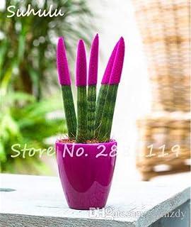 100 piezas semillas Sansevieria semillas baratas Sansevieria, Bonsai balcón, contra la purificación del aire mezclan colores casa jardín