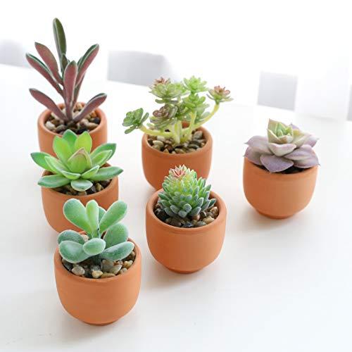 Veryhome Künstliche Sukkulenten Gefälschte Pflanzen Eingemacht In Mini Quadratische Weiße Töpfe Für Hausgarten Schreibtisch Party Dekoration Grün (Tontöpfe, 6 Stück)