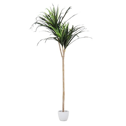 不二貿易 フェイクグリーン 人工観葉植物 ドラセナ コンシンネ 高さ148cm 52692