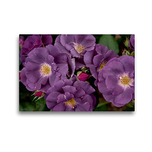 Premium Textil-Leinwand 45 x 30 cm Quer-Format Rose Rhapsody in Blue | Wandbild, HD-Bild auf Keilrahmen, Fertigbild auf hochwertigem Vlies, Leinwanddruck von Winfried Rusch - www.w-rusch.de