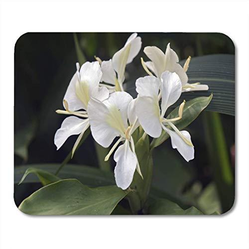 Semtomn Mouse Pad Weiße Ingwerlilie Hedychium Coronarium Blume der Zingiberaceae Mousepad für Notebooks, Desktop-Computer Mausmatten, Büromaterial