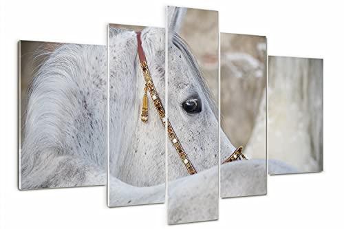 Tulup Cuadro de Cristal Pintura sobre Vidrio Decoracion de Pared 170x100cm Imagen Gráfica Moderno Impresión de 5 Piezas Vidrio Cristal - caballo árabe blanco