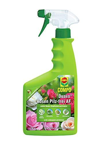 Compo Duaxo Rosen Pilz-frei AF, Bekämpfung von Pilzkrankheiten an Rosen, Zierpflanzen und Kräutern, Anwendungsfertige Handsprühflasche, 750 ml