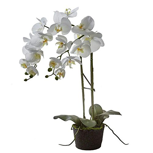 Künstliche Orchidee mit Ballen - Hochwertig & Naturgetreu - Höhe: 58cm - Weiße Blüten - Phalaenopsis/Dekoorchidee - Deko Zimmerpflanze/Kunstpflanze