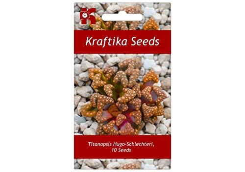 10 Samen Titanopsis Hugo-Schlechteri, Geschenk, Niedlich, Sukkulenten, Exotische Und Seltene Sukkulente Blume, Pflanzen, Samen, Geschenk Idee, Dekoration Cactus