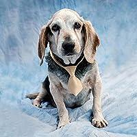 DIY 5Dダイヤモンド絵画フルラウンドドリル樹脂犬ダイヤモンド刺繡動物クロスステッチモザイクラインストーン写真家の装飾、15.75x23.62インチ/ 40x60CM