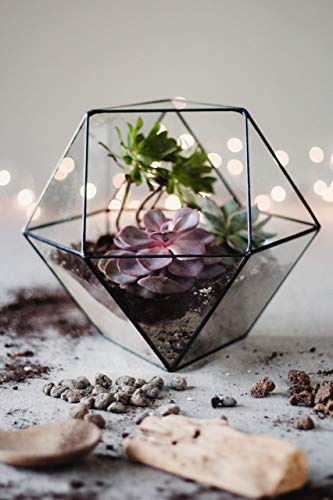 Waen | Large Clear Glass Geometric Terrarium Container - Cuboctahedron | Modern Planter for Indoor Gardening | Coffee Table - Home - Living Room Decorations | Table Centerpiece (Copper, Silver, Black)