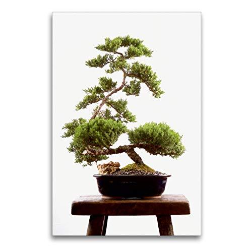 CALVENDO Premium Textil-Leinwand 60 x 90 cm Hoch-Format Japanischer Bonsai, Leinwanddruck Verlag