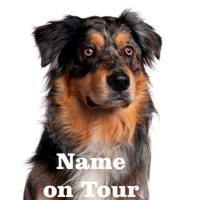 wodtke-werbetechnik hundeauf Colle Australie Shepherd Marron