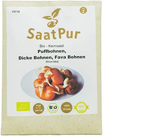 SaatPur Bio Keimsprossen - Puffbohne - Keimsaat für die Sprossenzucht zuhause - 50g