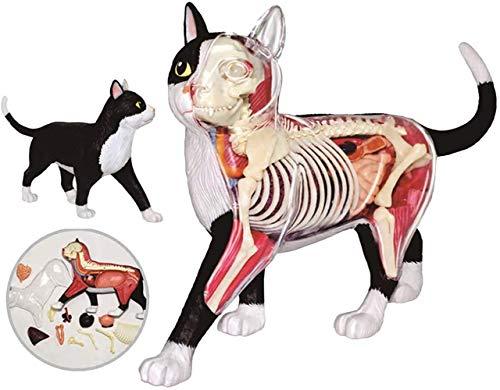 Diyade 4D Schwarzweiss-Katze Anatomy Model Kits, abnehmbar 28 Teile Tierbiologie Organ Medizinisches Lehrmodell, Puzzle-Montage-Spielzeug