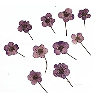 Silk Flower Arrangements Artificial and Dried Flower Small Narcissus with Stem Dried Flower for Bookmark Material 100pcs - ( Color: Purple )