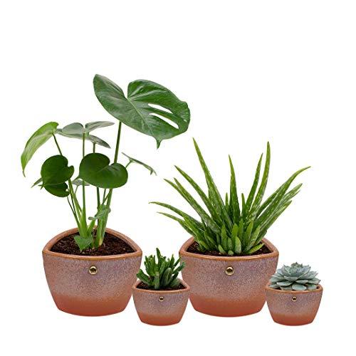 Set van 4 planten met bijpassende terracotta plantenpotten - kamerplanten voor binnen met verschillende groottes - Clark