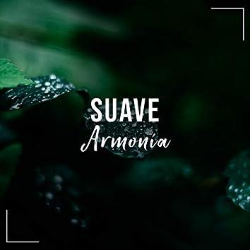 # Suave Armonía