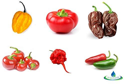 Kit Peperoncini Piccanti 6 Varietà Classiche + Vasetti Biodegradabili + Guida Coltivazione Carolina Reaper Jalapeno Habanero Bacio di Satana Topepo