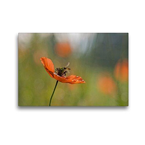 CALVENDO Toile Textile de qualité supérieure de 45 cm x 30 cm, Motif de Coquelicots - Pure Fascination en Rouge - Tableau sur châssis Nature Toile Murale Motif Nature