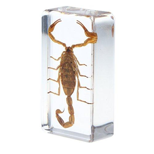 Juguete de Insectos Muestra de Bichos de Resina Modelo de Araña/Avispa/Escabarajo Regalo Creativo de Niños - escorpión Amarillo b