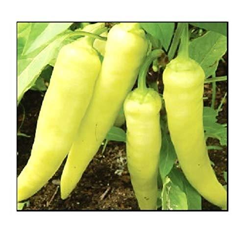 100 Sweet Banana Pepper Seeds   Non-GMO   Fresh Garden Seeds