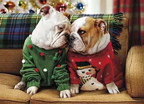 Avanti 10-Count Christmas Cards with Envelopes, Bulldogs in Holiday Sweaters