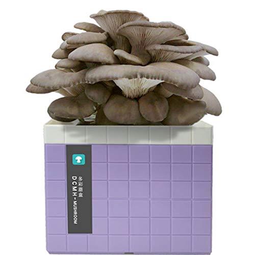 Rowe Cultive su Propio Kit de Verduras, Oyster Oster Mushroom Mycelium Spawn Sports Bag Kits completos, Oyster Mushroom Mycelium Spawn Spores Bag (Color : Purple)