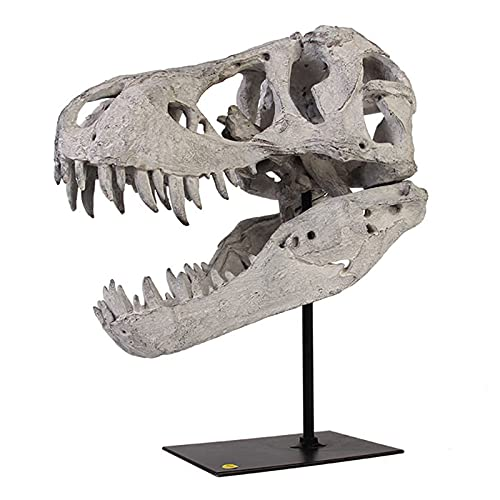 LUCKFY Estátua de crânio T-Rex – Réplica de resina de crânio de Tiranossauro Rex – Modelo de estátua de fóssil de dinossauro – para decoração de casa e escritório, exibição de prateleira, ferramenta de ensino, 30 cm de altura