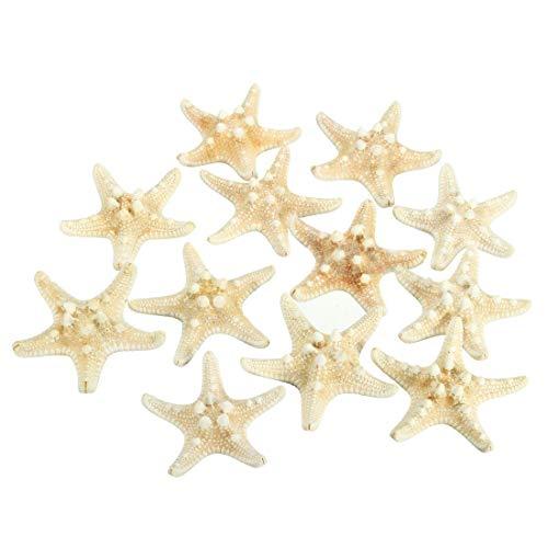 Huante 12 x pomos blancos de 5 cm a 7 cm conchas de estrella de mar para playa, boda, decoración de manualidades