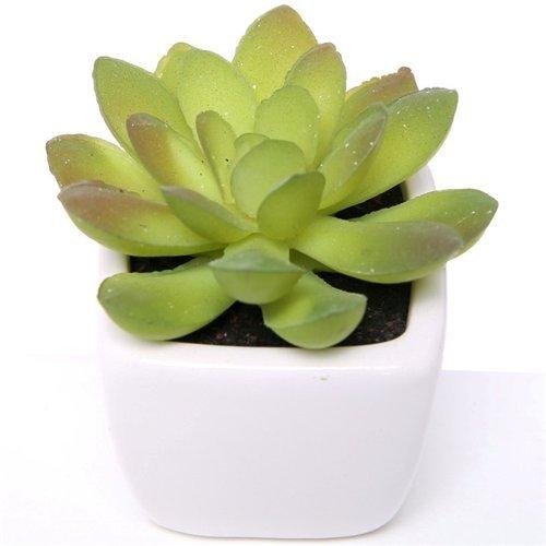 Be-Creative Crassula Buddhas Temple Succulent House Plant in a 5.5cm Pot